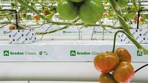 Growing solutions, growth, quality, innovative, development, Grotop Expert, grodan