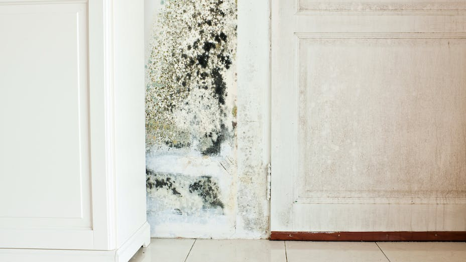 Mold Growth on Wall and Damp Stained Wood Door. Designing with mold-resistant stone wool insulation and building materials.