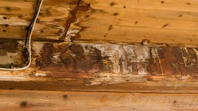 mould, humidity, moisture, water, photo, germany, construction damage