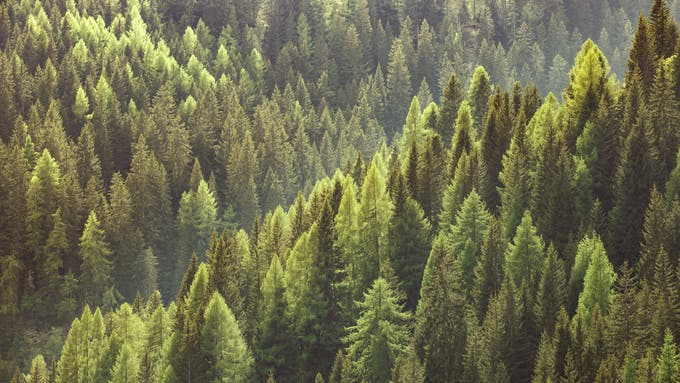 RockWorld imagery, The big picture, forest, greenery, nature