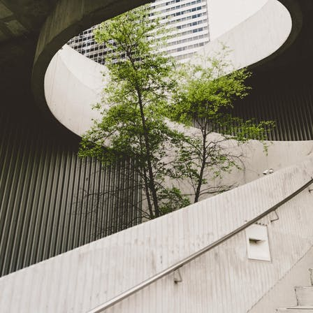 A tree growing inside a round staircase in an urban environment.