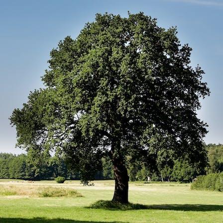 nature, tree, ecology, sustainability, germany