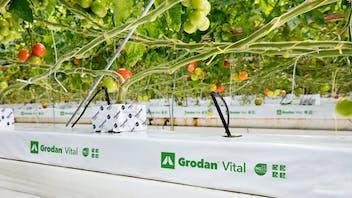 Growing solutions, growth, quality, innovative, development, Grodan Vital, grodan