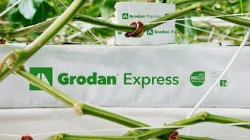 Grodan Express