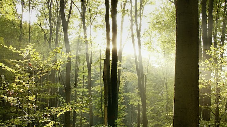 benefits, forest, trees, tree, sustainability, industrial, marine, offshore