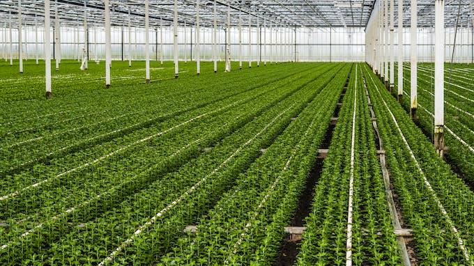 Grodan, Precision Growing, Agriculture, Plants