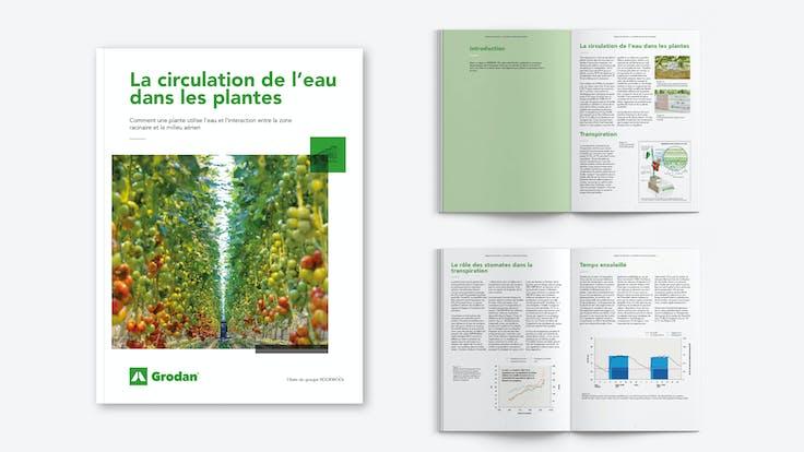 whitepaper, visual, mockup, Movement of water through plants, FR