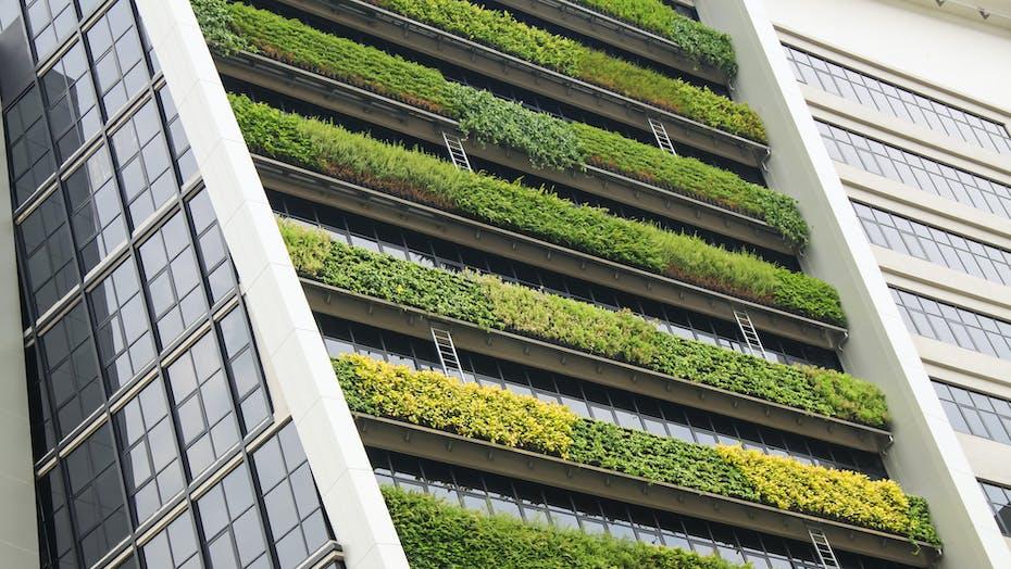 vertical garden a concept of sustainable building, eco building landscape climbing plants