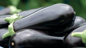 vegetable solutions, substrate slabs, vegetable, growing, Eggplant, grodan, aubergine