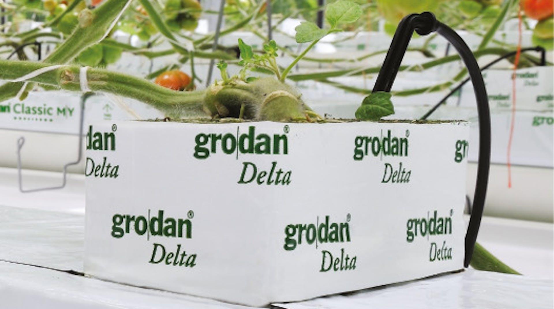 Growing solutions, growth, quality, innovative, development, Tomato plant, grown, Grodan Delta block, greenhouse