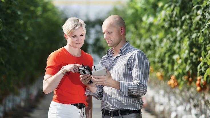 two people, standing, in greenhouse, rows of tomatoes, looking, Grosens enquipment, grodan