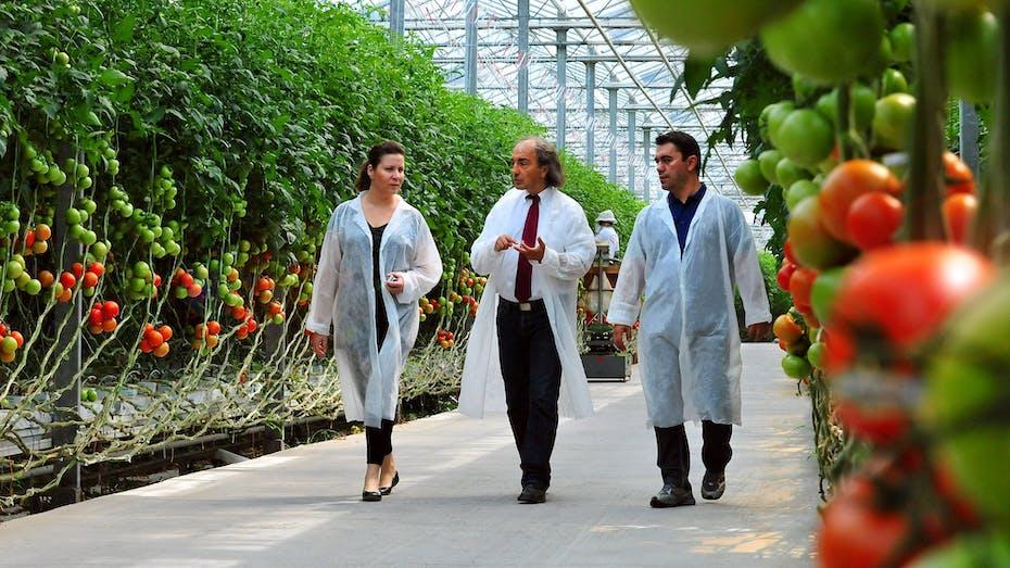 new blog-article, tomatoes, greenhouse, Katsanos