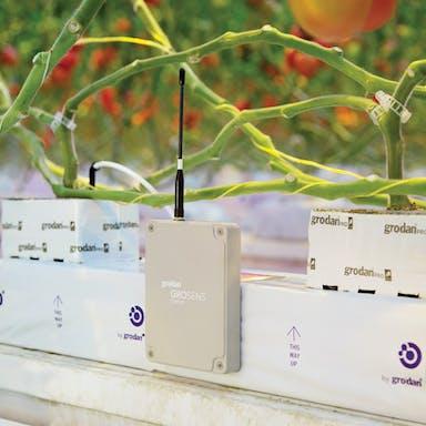 learning, GroSens, growers, information, root zone, management decisions, Grodan Grosens system, grodan slab, tomato, plant, grodan