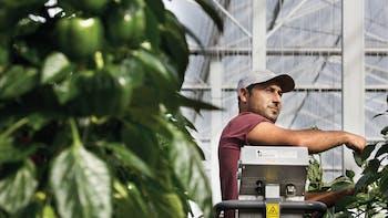 vegetable solutions, substrate slabs, vegetable, growing, Sweet Pepper, grodan