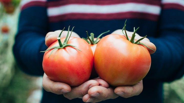 Kazmierczak Family, Water Properties, tomatoes