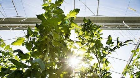 greenhouse, plants, sun, glasshouse, grodan