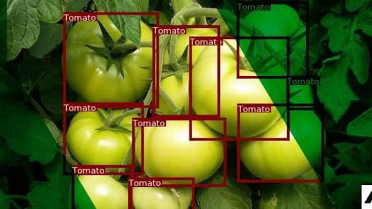 PL website, article: Obciążenie roślin owocami