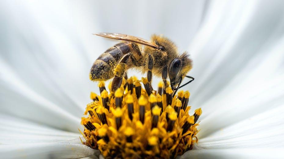 photos, germany, schrägdach broschüre, nature, flower, wasp, bee