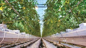 about grodan, innovative and sustainable, stone wool, growing, Precision Growing principles, greenhouse, tomato-growing, grodan