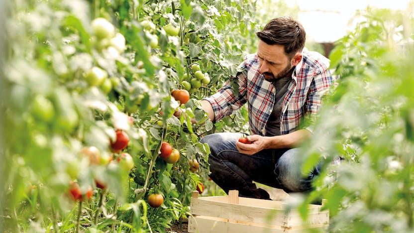 RockWorld imagery,The Big Picture, greenery, Grodan, people, plants, tomatoes, greenhouse