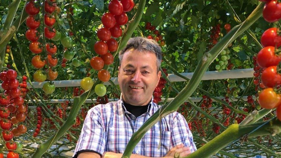 Cock van Overbeek, man, plant, tomato, grodan