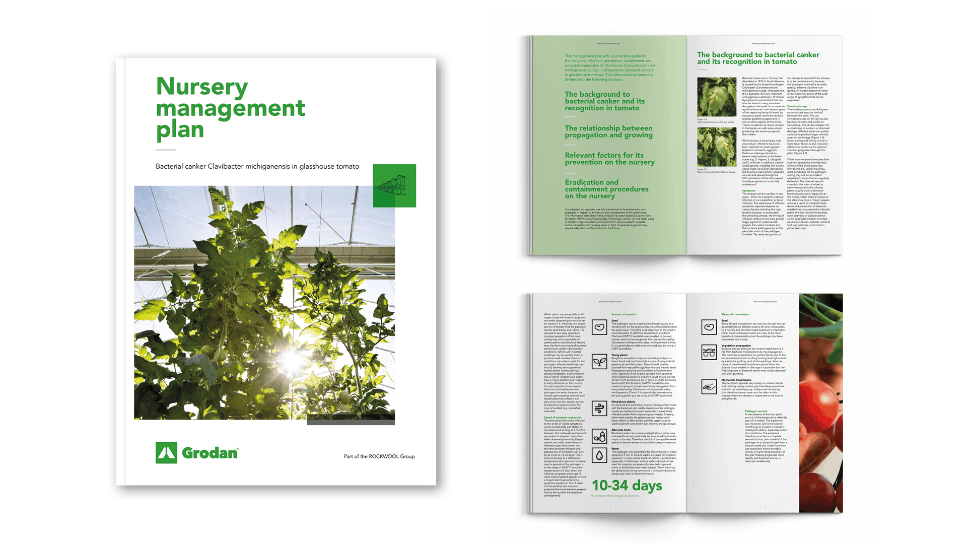 Visual Nursery Management plan bacterial canker tomato