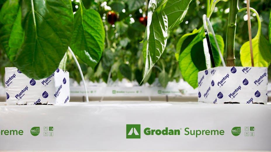 vegetable solutions, substrate slabs, vegetable, growing, tomato, cucumber, sweet pepper, aubergine crops, grodan