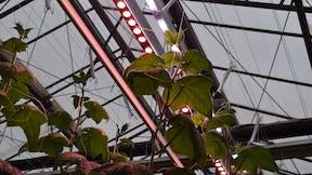 vertical farming, botany, learning, grodan