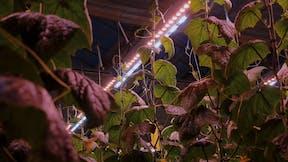 blog, article, grodan, growers, Gro-Hack