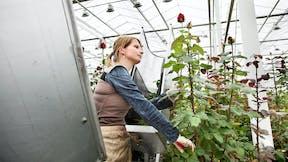 application, growing solution, Grodan, development, slab, Precision Growing, innovative growing tools, plant, rose