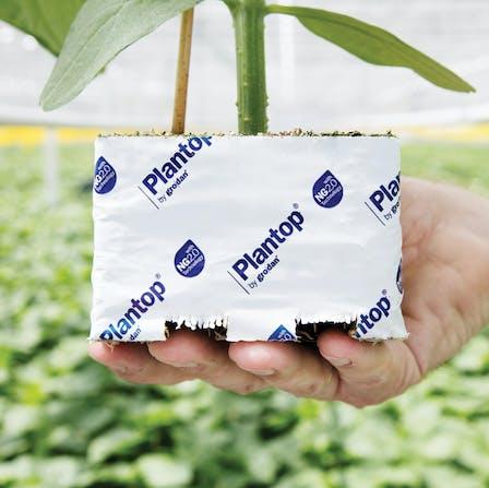 vegetable solutions, substrate slabs, vegetable, growing, Cucumber, grodan