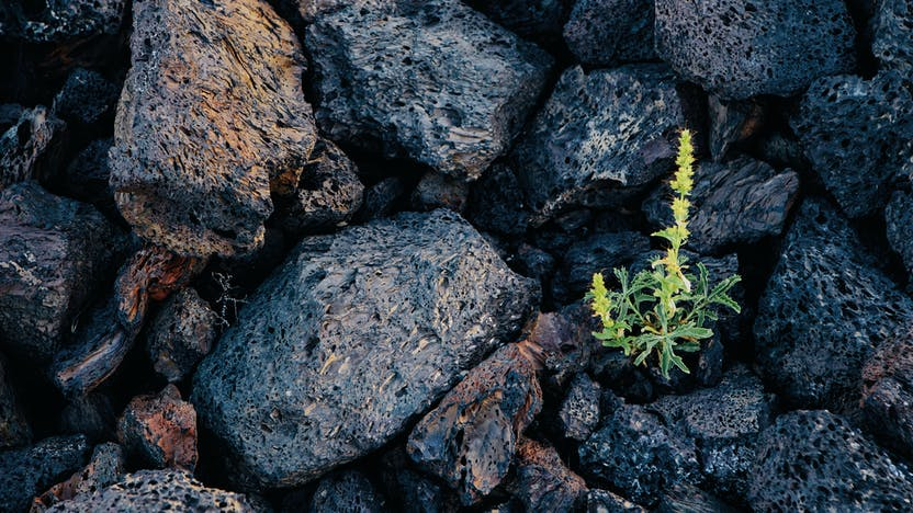 RockWorld imagery,The Big Picture, stone, rock, plant,