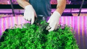 vegetable solutions, substrate slabs, vegetable, growing, Leafy greens, culinary herbs, grodan