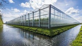 grodan, greenhouse, cover whitepaper