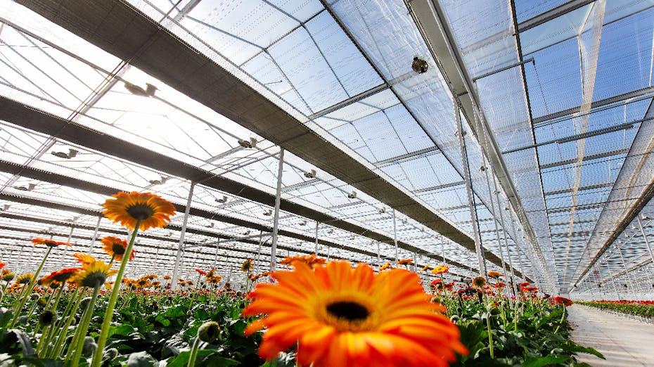 grodan, flower, bio diversity, blog, article, greenhouse
