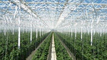 blog, greenhouse, green knowledge, development, horticulture, russia