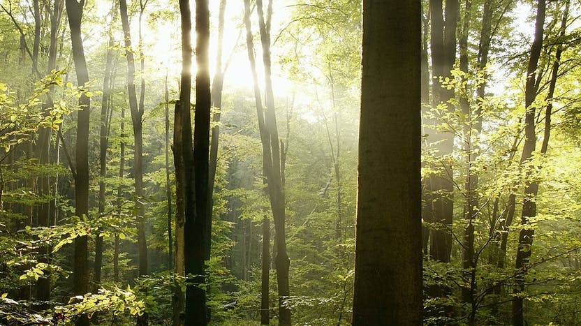 Trees, light, forest, wood