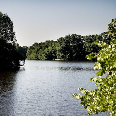 rockwool, lake, nature, trees, photo