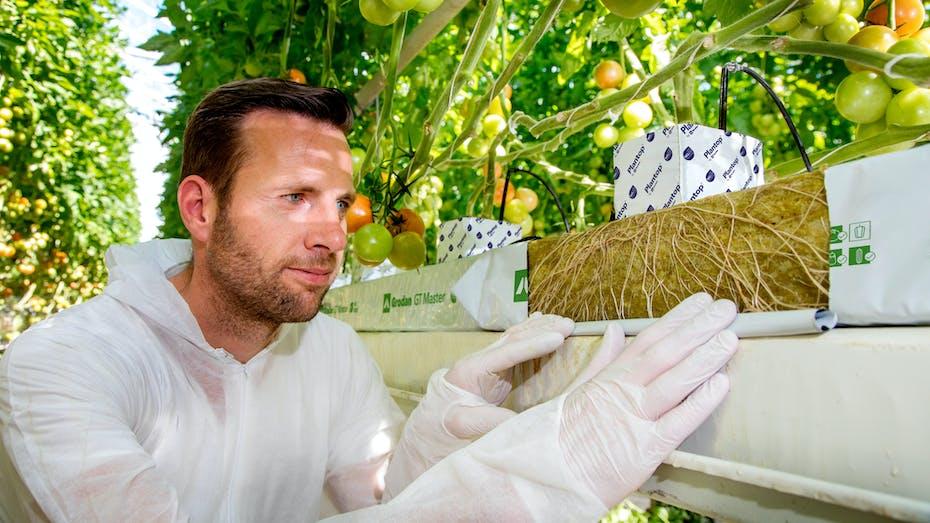 application, growing solution, Grodan, development, slab, Precision Growing, innovative growing tools, plant
