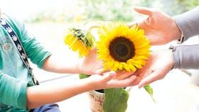 image, living, family, home, sun flower, diy, germany, job 5026